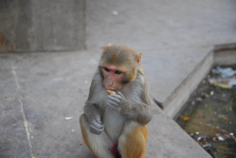 MonkeyTemple-16.jpg