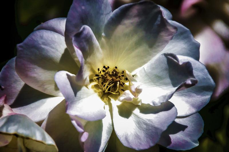 June 21 - Flower.jpg