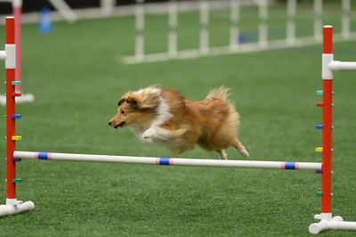 SOJAC AKC Agility Trial March 20-22