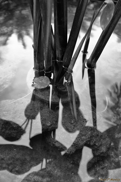 Stems in Water