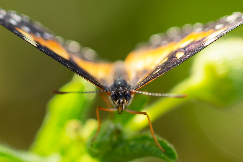 #10 Butterfly Closeup II