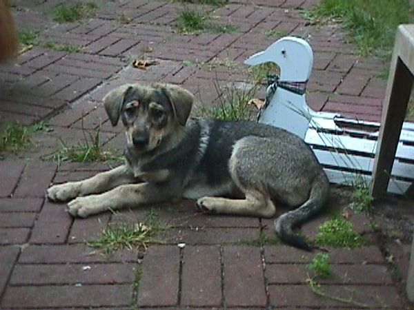 Matilda, waltzing matilda.  She was Rodney's dog, but she spent a lot of time with us.