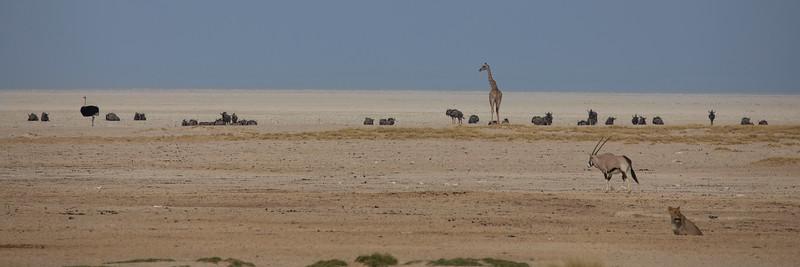 Namibia 69A8551.jpg