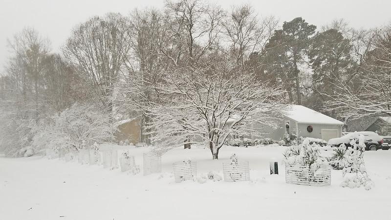 december snow 3.jpg