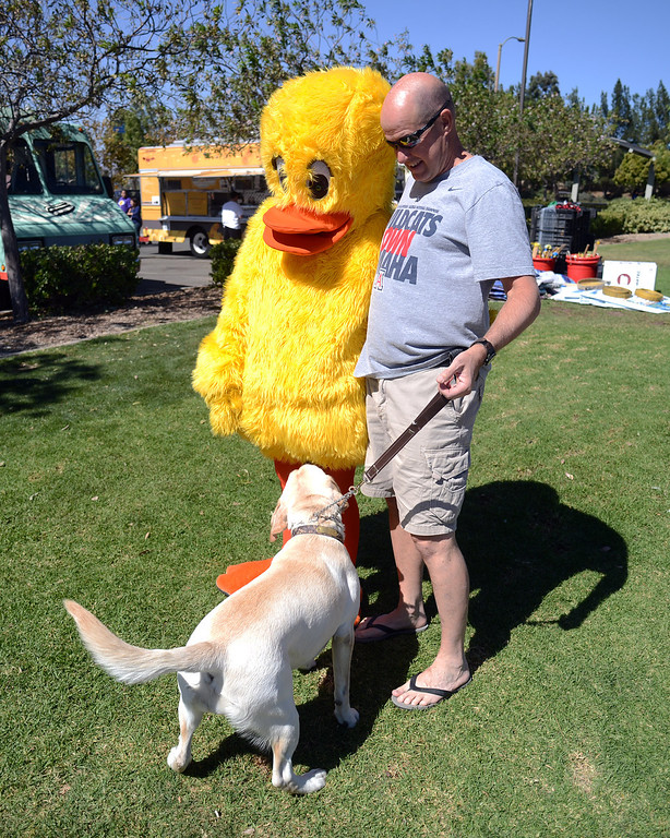 . Brian Murphy\'s dog Lola takes a good look at a person dressed as a duck  during the  Samuel Dixon Family Health Centers\' 11th annual Rubber Ducky Regatta at Bridgeport Park in Santa Clarita Saturday, October 5, 2013.  The event raises money for charity to help uninsured and underinsured patient care. (Photo by Hans Gutknecht/Los Angeles Daily News)