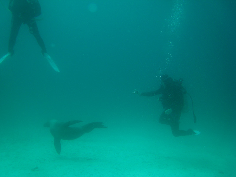 Diving in the Galapagos (109 of 392)