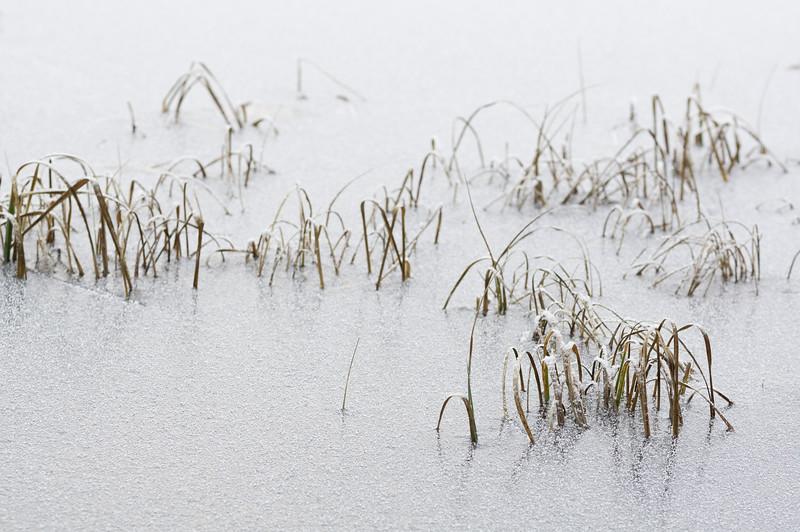 The Frozen Lake I