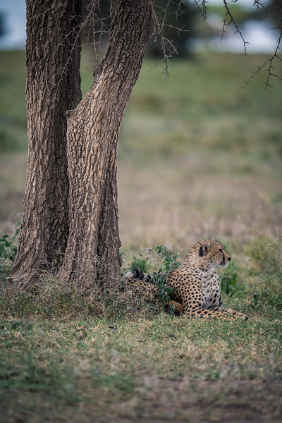 Tanzania_Feb_2018-288.jpg