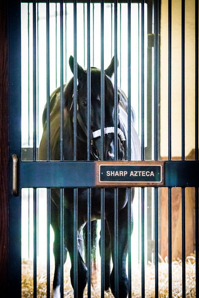 Sharp Azteca
