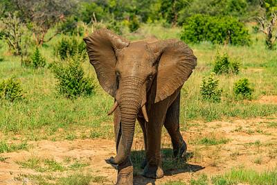 Zimbabwe - Hwange