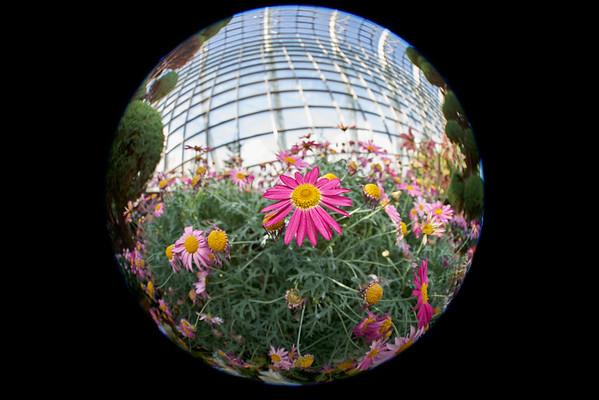 Flower Macro Highlights