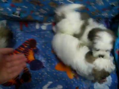 Daisy Puppy Dog Videos