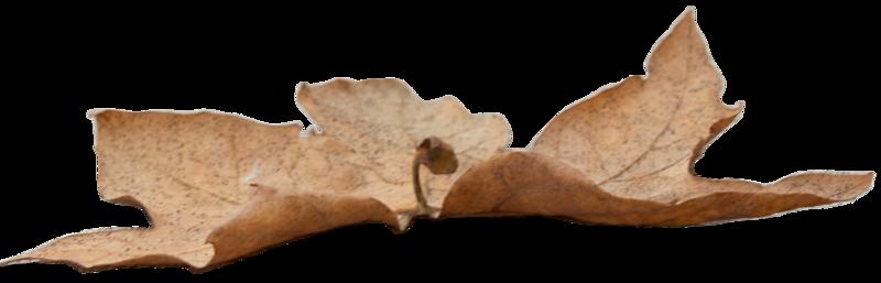 Leaf 28.png