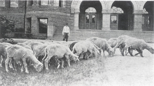 Palmer Hall with Sheep Grazing circa 1911