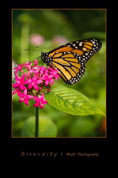 Butterflies-orange-1.jpg