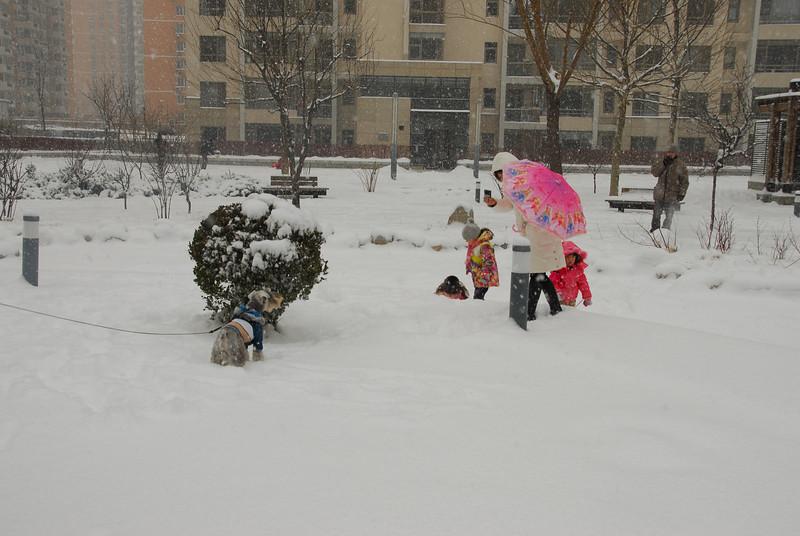 [20100103] 1st 2010 Snow in Beijing (52).JPG