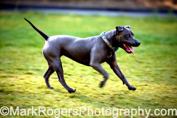 Stern Grove Dog Park