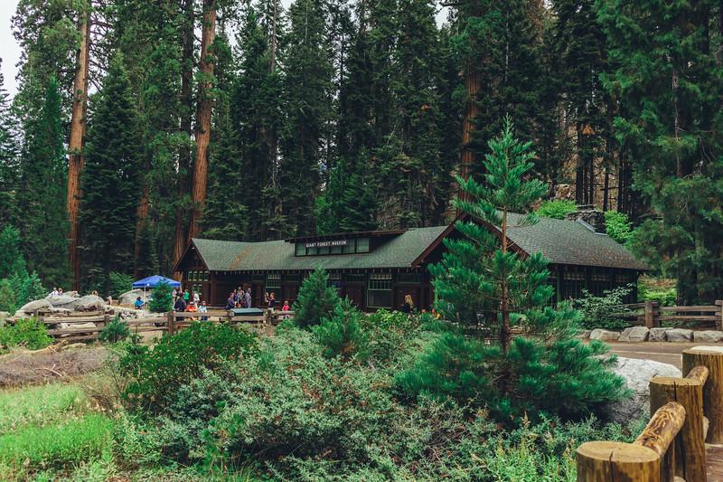 Rui in Sequoia-07029.jpg