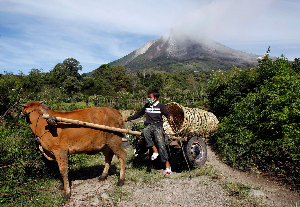 . A villager rides a cow cart as Mount Sinabung is seen in the background in Karo, North Sumatra, Indonesia, Monday, Sept. 16, 2013. Thousands of people have been evacuated from their homes after the volcano erupted Sunday.   (AP Photo/Binsar Bakkara)