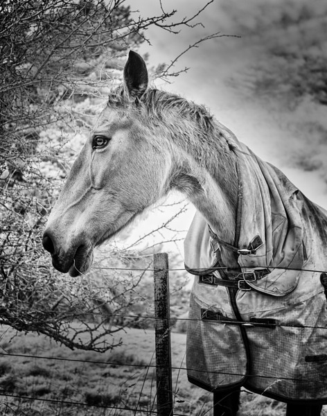 My Horse Friend :-)