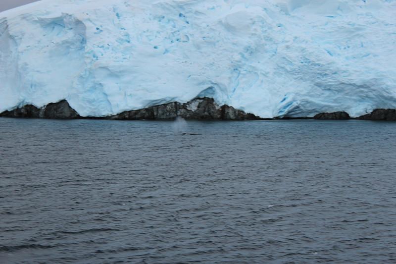 Antarctica 147.JPG