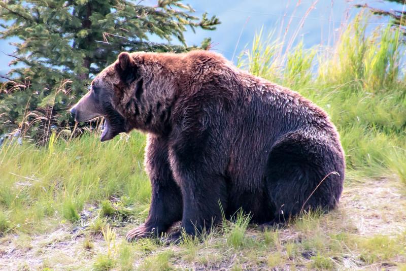 2014 08 18_Alaska_0671_edited-1.jpg
