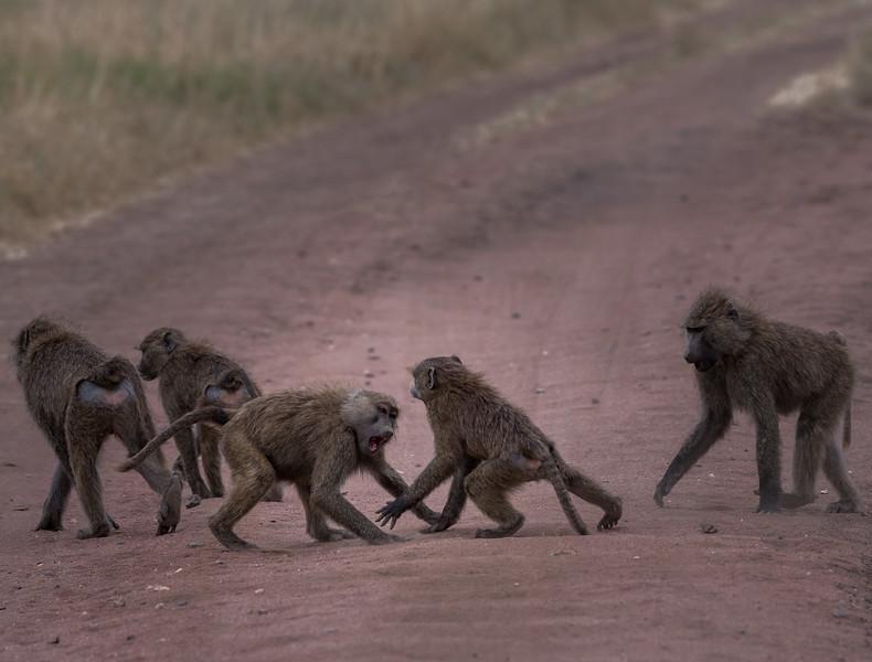 Tanzania_Feb_2018-1286.jpg