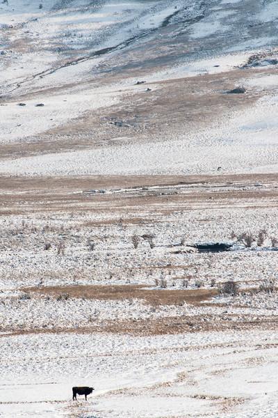 A lone traveller on a snowy terrain....Phobjika Valley, Bhutan
