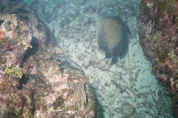 Cancun Mexico - Bill Dive Trip 2000