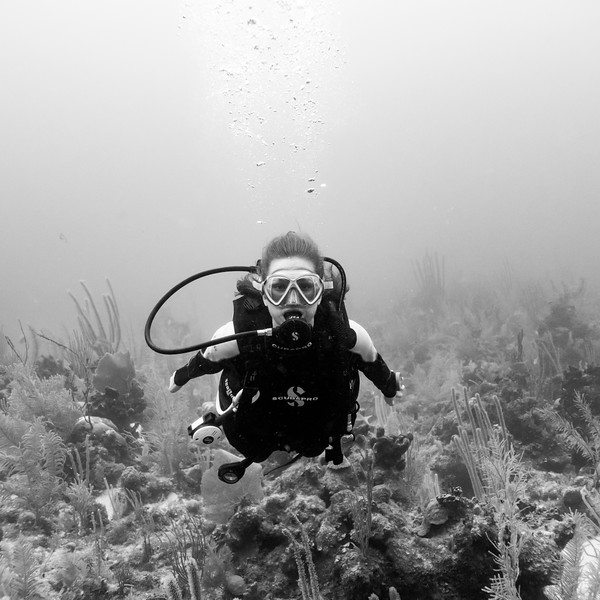 Scuba diver underwater, Joe's Wall, Turneffe Atoll, Belize Barrier Reef, Belize
