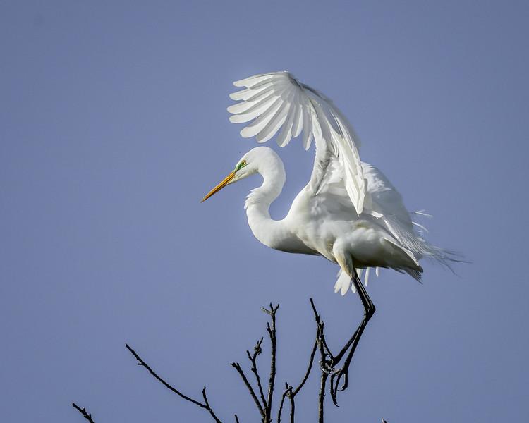 Elkhorn Slough - Moss Landing CA USA