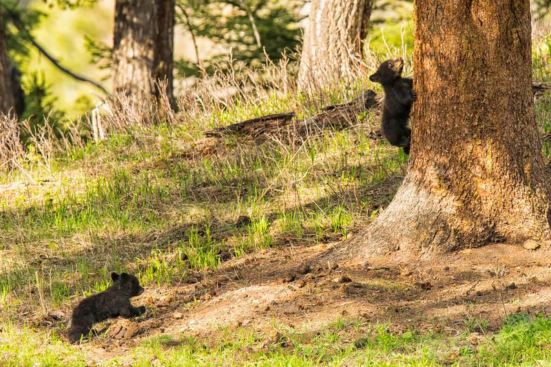 Yellowstone_May_2014_FH0T5722.jpg