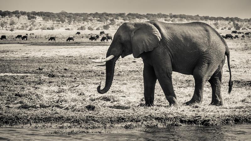 Marvelous wildlife scene around stunning Chobe River.