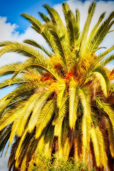 Palm Tree, San Jose, California, 2010