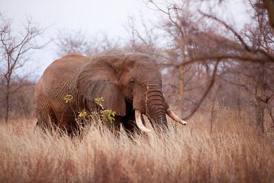 Tanzania Safari - Day 3