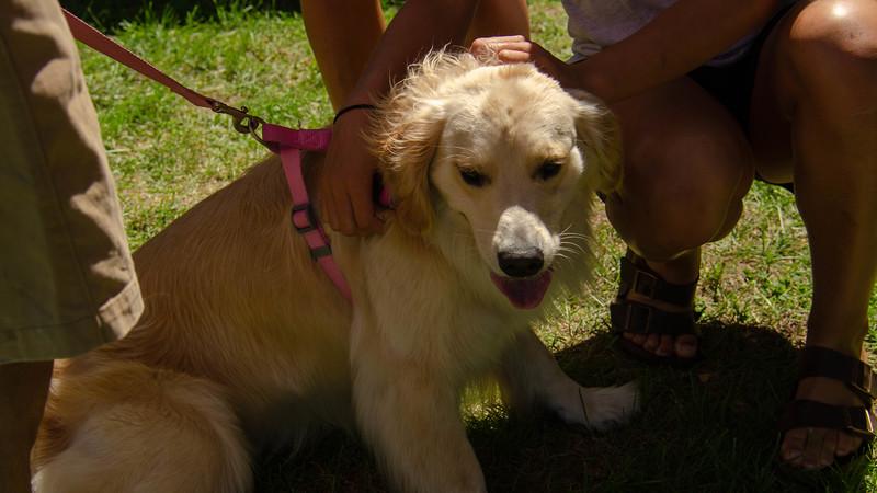 PuppyParty18-303.jpg