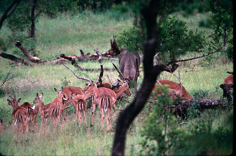 Sabi Sands portion of Kruger National Park