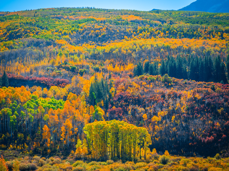 Kebler Pass! Colorado Fall Colors Fine Art Landscape Nature Photography Fuji GFX100  Elliot McGucken Fine Art Landscape Nature Photography Prints & Wall Art