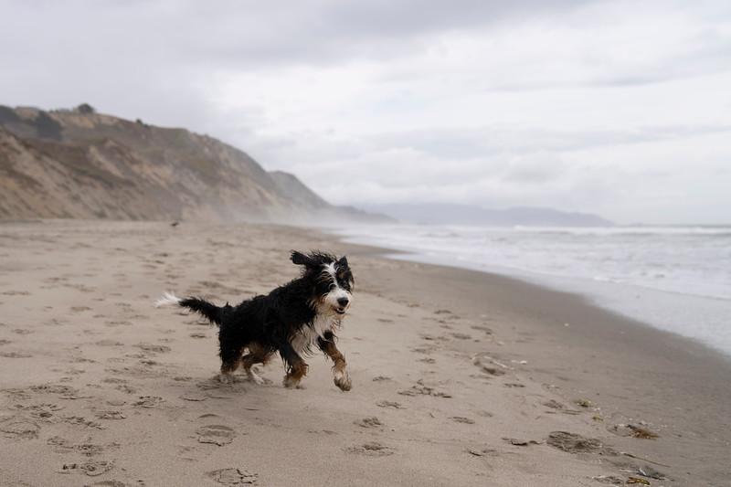 ocean beach quarantine 1224015-30-20.jpg