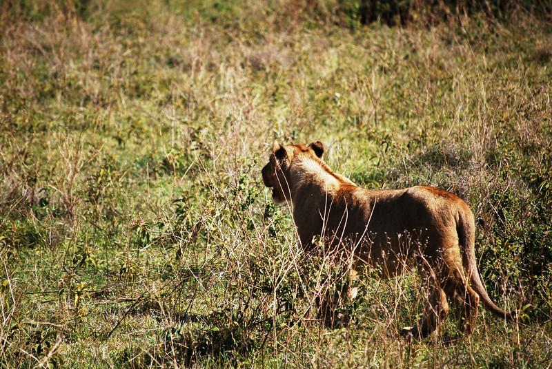 Ngorongoro (81).JPG