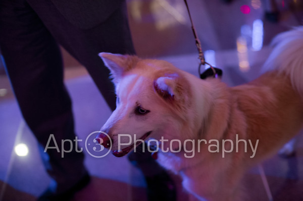 Humane Society's 11th Annual Sugar & Champagne Affair [2012.02.03]