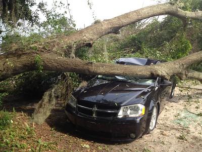 helloGoodbuy Tree on Car 09-05-15