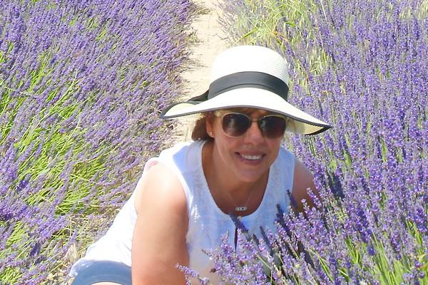 07 Robin's Provence