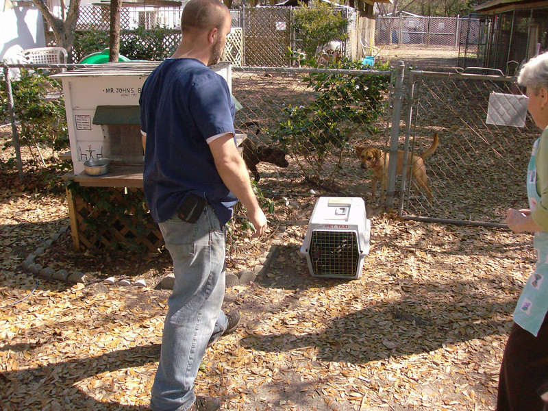 Jason Jenkins and Piepsi Joyce grabbing the kennel that had 13 puppies stuffed in it that was left outside of the shelter. Mr. John's Bistro was the home for the outdoor, polydactyl, tuxedo cat that lived there. Dizzy (left) and Chile (right) checking the puppies out!