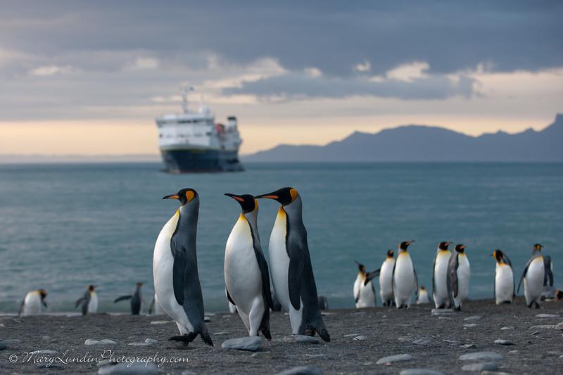 Antarctic-84