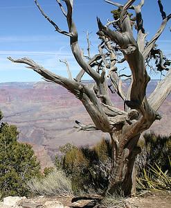 Arizona - Tucson, Sedona, Grand Canyon