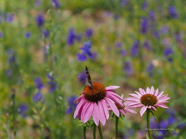 2013-06-23 Ozark Botanical Garden