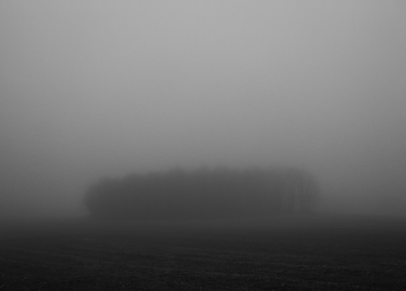 Copse of Trees [Fog, Accident, MD]