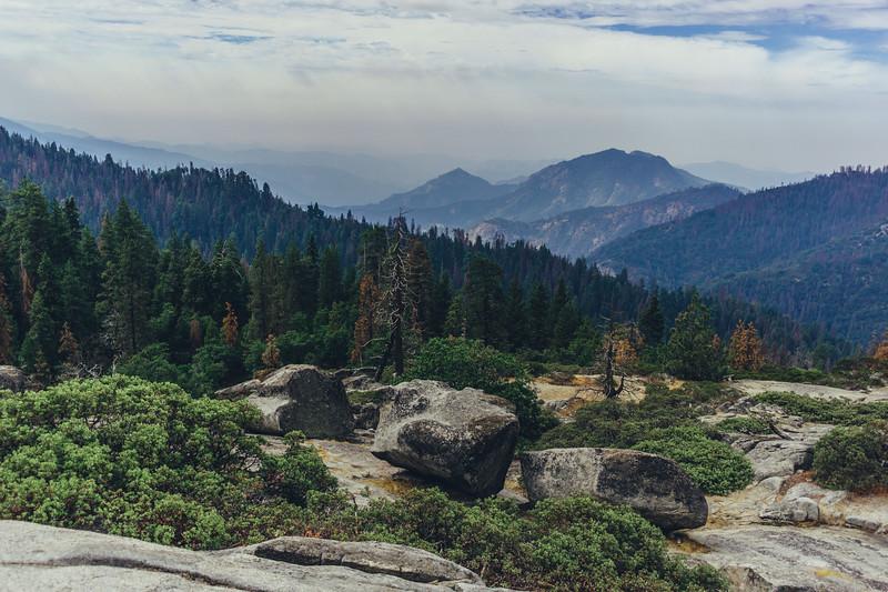 Rui in Sequoia-07027.jpg