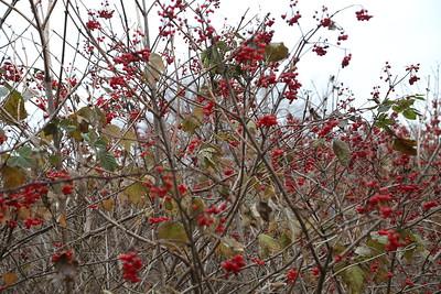 Hockanum River -- Late Autumn 11-21-18